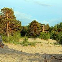 Северодвинск. Сосновый бор :: Владимир Шибинский