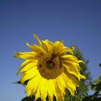Подобный солнцу :: Лариса Рогова