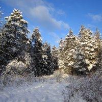 В морозный день :: Андрей Снегерёв
