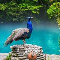 Голубое озеро. Абхазия :: Helena Olipir