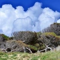Больные деревья и небесный консилиум. :: Виталий Половинко