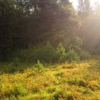 Лучи осеннего солнца :: Андрей Снегерёв