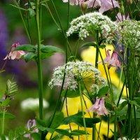 Цветочки.в траве. :: Владимир Гилясев