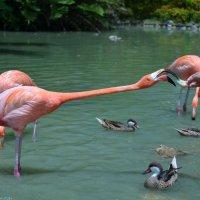 Фламинго :: Михаил Рувинов