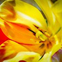 цветочек :: Маняша Карлова