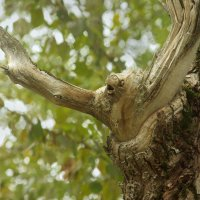 Тревога по лесу :: Валерий Талашов