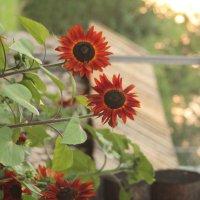 лютики цветочки :: Viktoria Malova