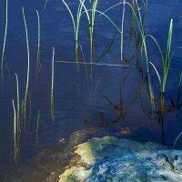 север в расцвете :: Tristana Tiamat