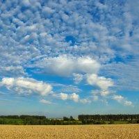 небо над колосьями :: Алексей Кошелев