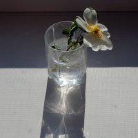 цветок и его тень :: Валерия Шамсутдинова