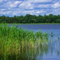 Озеро в Межэзерс :: Диана Матисоне
