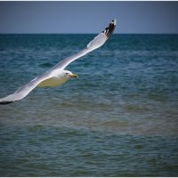 Лето,море,чайки... :: Александр Лонский
