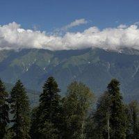 И лес,и облака ,и горы.... :: Виолетта
