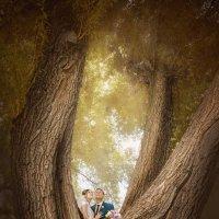 Тайны леса :: Виктория Бендас