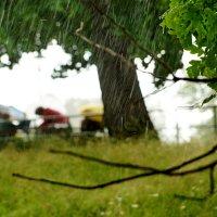 дождь начался :: Александр Шурпаков