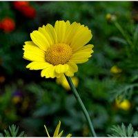 Цветы :: Анатолий