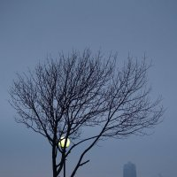 Лунный блюз :: Дмитрий Проскурин