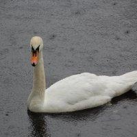 Дождь на пруду :: Aнна Зарубина