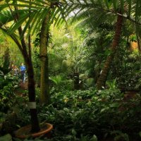 Тропический лес :: Alexander