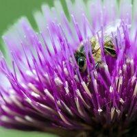 В поисках нектара... :: Федор Кованский