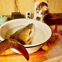 Она не из нашего аквариума !!! :: Milocs Морозова Людмила