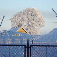 Зима 2014 в г. Ивангороде :: Руслан 1111