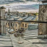На Питерских крышах :: Владимир Горубин