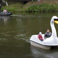 О черном и белом лебедях ) :: Тарас Золотько