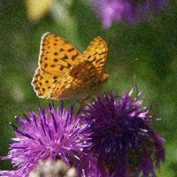 Утро красивой бабочки :: Галина Кан