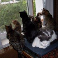 Кошки на окошке :: parasik62 Воронина
