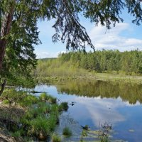 Летний день на пруду :: Ольга
