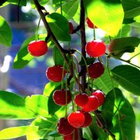 утро в саду :: Константин Снежин