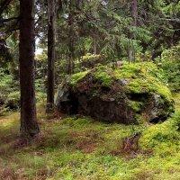 Сказки старого леса :: Liliya Kharlamova