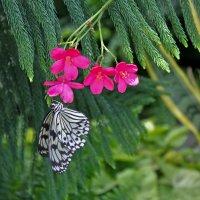 Порхающий цветочек :: Tatiana P.