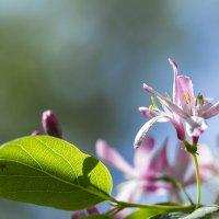 Розовый цветочек :: Татьяна Иванникова