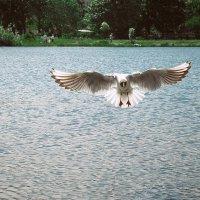 Чайка летит... :: Александра К