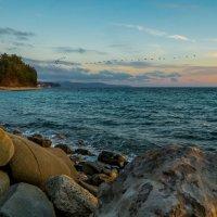 Море-закат-утки. :: Александр Хорошилов