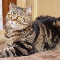 В доме, где есть кот (кошка), других украшений не нужно.... :: Galina Leskova