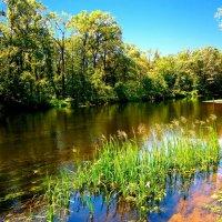 Река детства.  Другая река, другая вода :: Лариса Коломиец