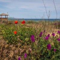 Цветы на пляже :: Александр Хорошилов