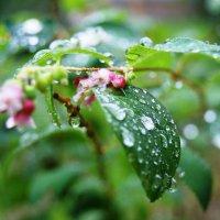 После дождя... :: Natalisa Sokolets