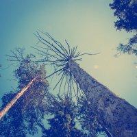 Сухое дерево :: Сергей Филимончук