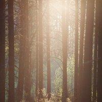 Закат в лесу :: Владимир Зайцев