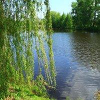 На озере :: Владимир Андреевич Ульянов