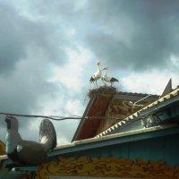 Аист на крыше :: Лариса Рогова