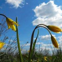 Первые весенние цветы :: Николай Сапегин