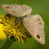 Охота на бабочек :: Татьяна Титова