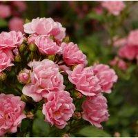 Цветов душистым ароматом дышит лето... :: Татьянка ***