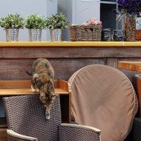 Любопытный кот #4. Опять обманули... :: Олег К.