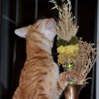 Ваза и кот. :: Raisa Ivanova